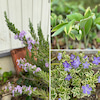 花壇のお花達の画像