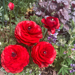 お花見⭐︎の画像