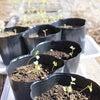 野菜の苗づくりスタートの画像
