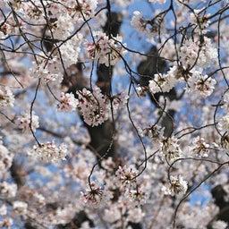 画像 【京都】桜の穴場スポット‼️桜寺「墨染寺」でいただいたステキな【限定御朱印】 の記事より 12つ目