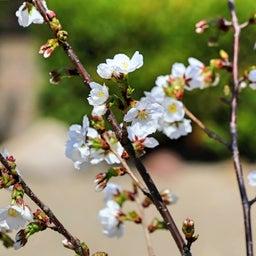 画像 【京都】桜の穴場スポット‼️桜寺「墨染寺」でいただいたステキな【限定御朱印】 の記事より 16つ目