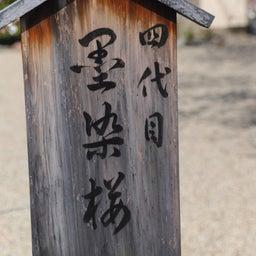 画像 【京都】桜の穴場スポット‼️桜寺「墨染寺」でいただいたステキな【限定御朱印】 の記事より 15つ目