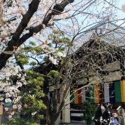画像 【京都】桜の穴場スポット‼️桜寺「墨染寺」でいただいたステキな【限定御朱印】 の記事より 13つ目