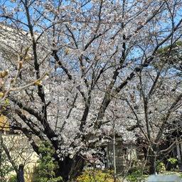 画像 【京都】桜の穴場スポット‼️桜寺「墨染寺」でいただいたステキな【限定御朱印】 の記事より 11つ目