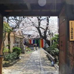 画像 【京都】桜の穴場スポット‼️桜寺「墨染寺」でいただいたステキな【限定御朱印】 の記事より 21つ目