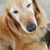 愛犬ユリとの幸せな日々を祈っての画像