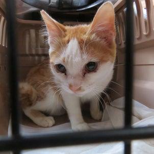 SOS!アパート解体、猫11匹の画像