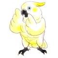 鳥の保護活動/TSUBASAみらくる日記