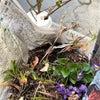 今日は、間もなく山梨の地を去る方のお庭から、いくつかの植物を分けていただいてきました。の画像