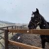 うらかわ優駿の里AERUさんがお越し下さいました。シャトルの放牧地清掃。の画像