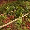 春爛漫な上野のひとこまの画像