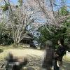 桜満開(小規模多機能ホームあったか)の画像