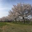 桜の下で憂う自動車の将来