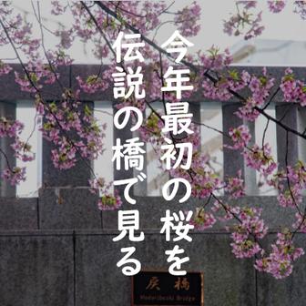 今年最初の桜を伝説の橋で見る