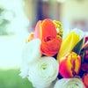 【ママ大丈夫だよ!】子育ての味方ソング #27「愛を込めて花束を」の画像
