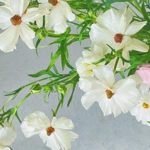 サロンのお花たちの画像