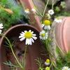 【鹿児島のアロマスクール】周りの春をみつけよう!!の画像