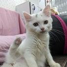 「GWは猫と過ごそう!キャンペーン」の記事より