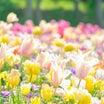 春だねえ。