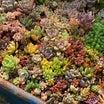 紅葉がさめた庭の多肉&フラリエハンドメイドフェスタ。