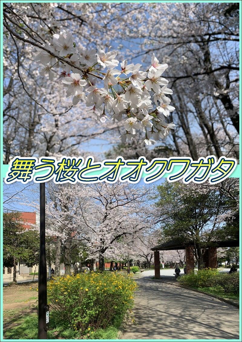 桜とオオクワガタ☆8周年記念!東京都足立区綾瀬の足つぼ&タイ古式&アロマオイルマッサージ☆03