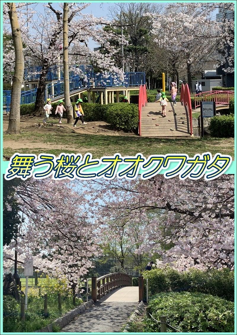 桜とオオクワガタ☆8周年記念!東京都足立区綾瀬の足つぼ&タイ古式&アロマオイルマッサージ☆09