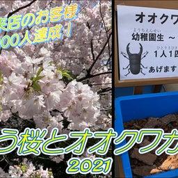 桜とオオクワガタ☆8周年記念!東京都足立区綾瀬の足つぼ&タイ古式&アロマオイルマッサージ☆01