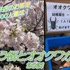 舞う桜とオオクワガタの春☆8周年目でご来店のお客様1000人達成!て事はいつものお客様のお陰ですの画像