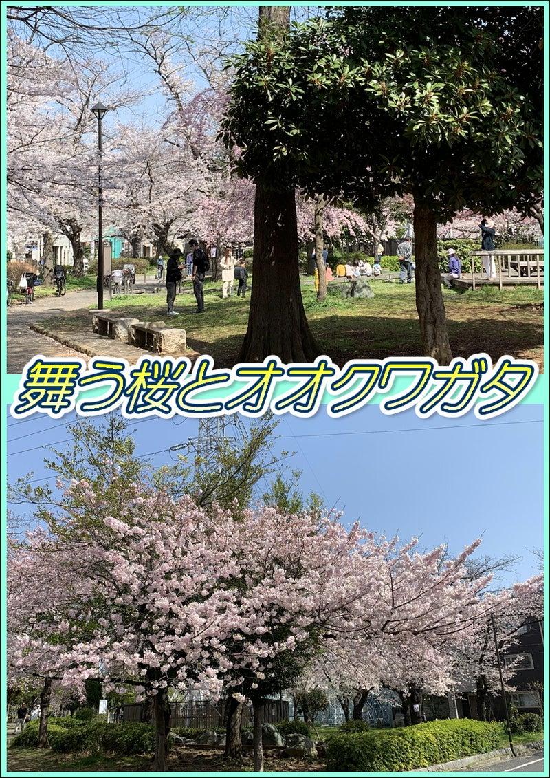 桜とオオクワガタ☆8周年記念!東京都足立区綾瀬の足つぼ&タイ古式&アロマオイルマッサージ☆04