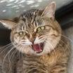 【YouTubeの人気動画分析】猫に威嚇される動画が再生回数を稼ぐ理由