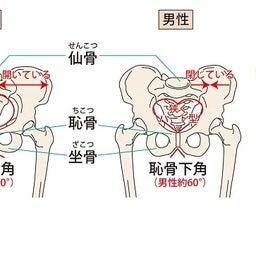 骨盤の位置・骨盤底筋