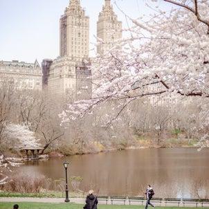 春爛漫♡ニューヨークがピンク色に♡の画像