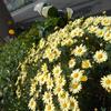 お花見の様子の画像