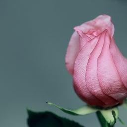 画像 恋愛したい40代シンママ必見!最高に幸せな引き寄せ法とは? の記事より 2つ目
