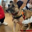 嬉しい再会 野犬のジャッキーは 立派な家庭犬!