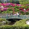 根津神社のつつじ  の画像