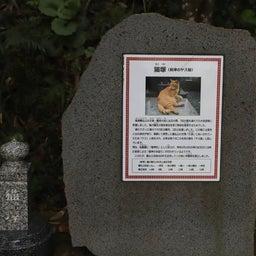 画像 【鹿児島】島津義弘公をお祀りする精矛神社でいただいたステキな新作【御朱印帳】 の記事より 23つ目