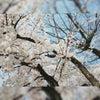 4月10日 本日3周年の画像