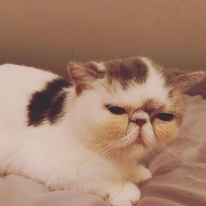 猫のお弔いの画像