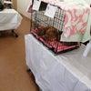 4月11日(日)坂田動物病院で猫の譲渡会を開催しましたの画像