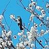 春が来たなぁおさんぽーの画像