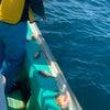 ジギング サビキ まとめ 真鯛釣れました!の画像