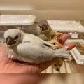 手のりインコのお店 &.Bird