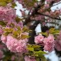 私色の日々  ~まことの花が咲くように~      (since2011)
