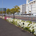 Suicaペンギン「休日‼️快晴のみなとみらいお散歩‼️」@ウォーキング・横浜・みなとみらい