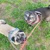 愛犬と心を通わすために必要なこと3つ♡の画像