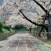 新しい春の画像
