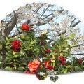 ☆桜☆花と風景と日常生活☆彡