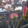 春の明日香村ツーリングの画像