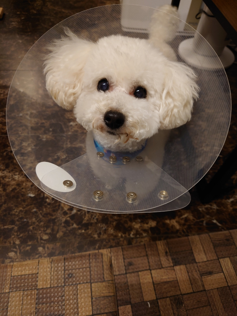 愛犬の手術